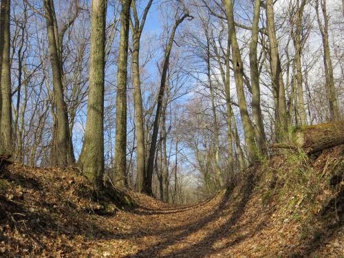 trail in a road cut