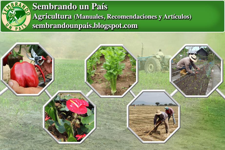 publicaciones y temáticas de agricultura