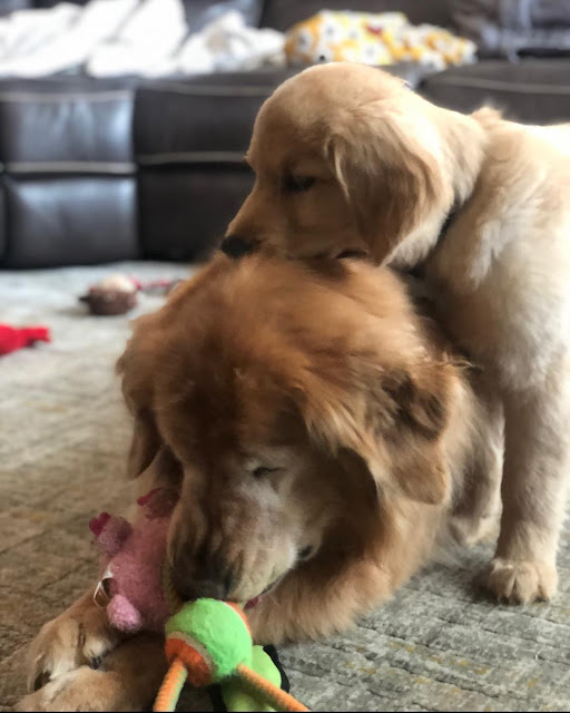 charlie and maverick playing