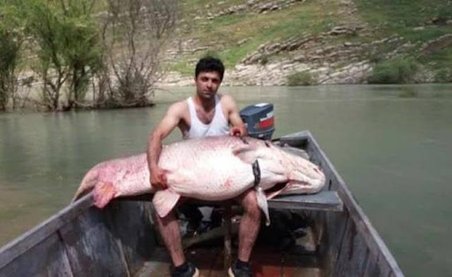 اصطاد سمكة تزن 175 كغ... فتم اعتقاله على الفور  في العراق اليكم قصة هذا الصياد سيئ الحظ