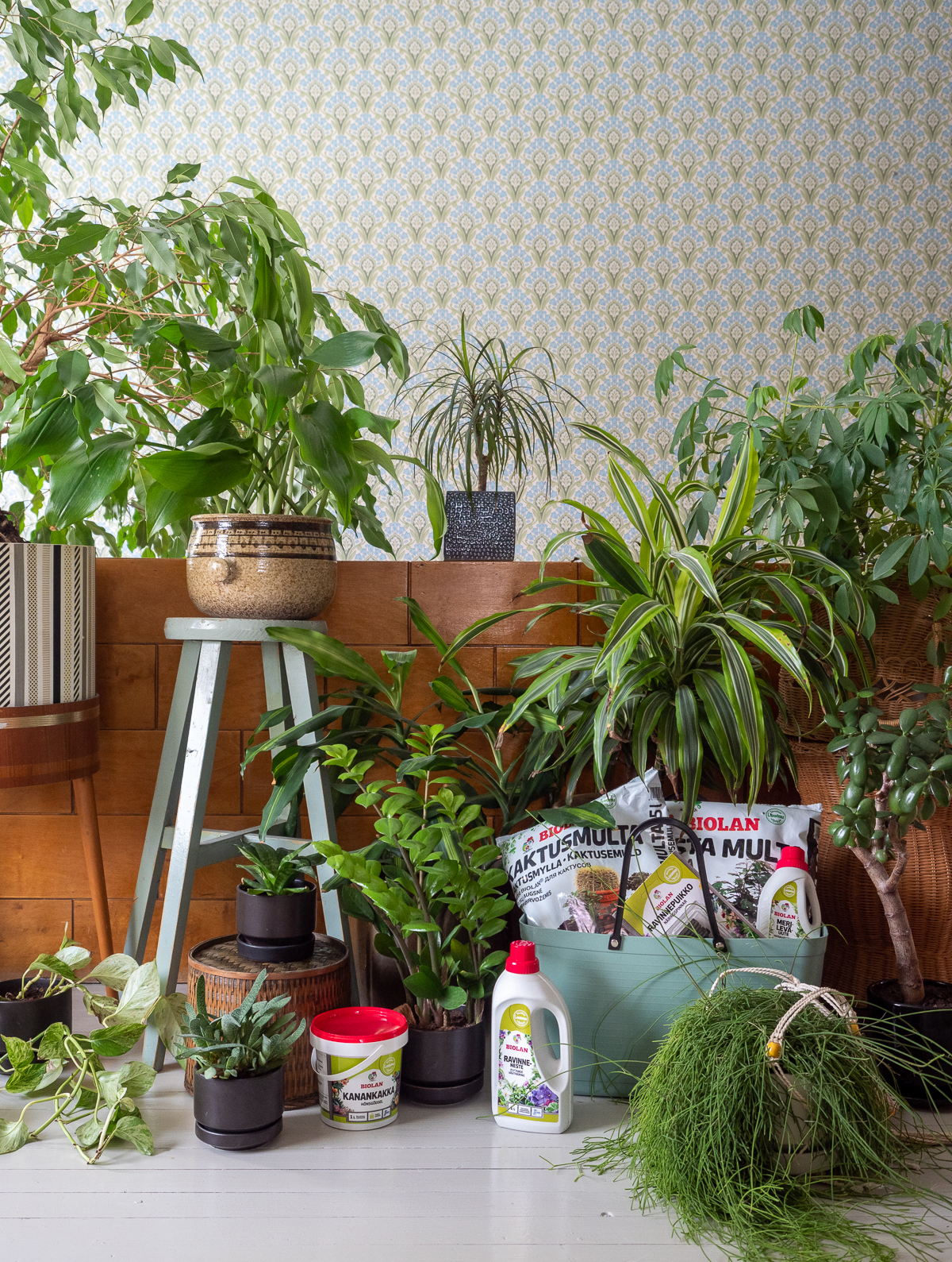 viherkasvien keväthuolto