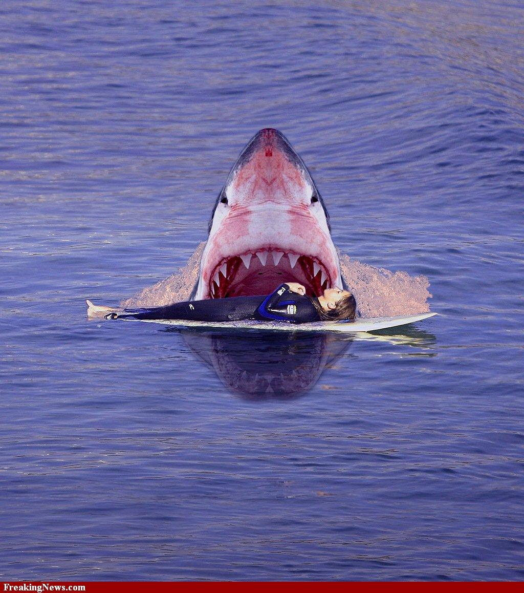 Animal Zoo Life Shark Sharks Shark Pictures Shark Facts