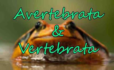 Sistem Pernapasan pada Hewan Avertebrata dan Vertebrata