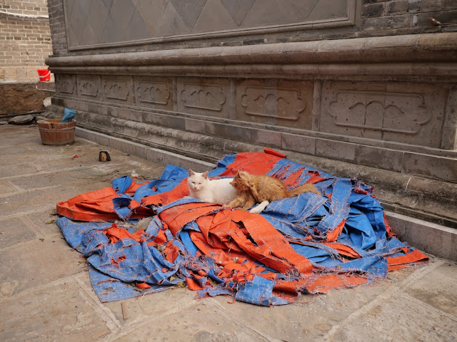 two cats resting on a pile of orange and blue materials