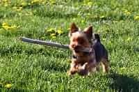 Cagnolino che corre e fa fare movimento anche al padrone