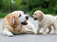 Ilmu Anjing dan Ilmu Jagung