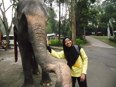 Kegiatan Mengasyikkan Bersama Keluarga di Taman Safari Bogor