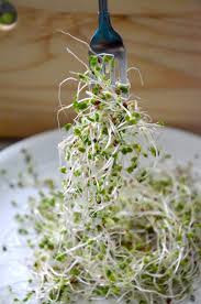 Planting Alfalfa: How To Grow Alfalfa - Tree Homes