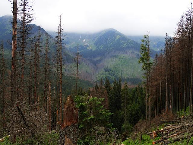 Widok na Tatry Zachodnie ze szlaku Dolina Kościeliska-Iwaniacka Przełęcz