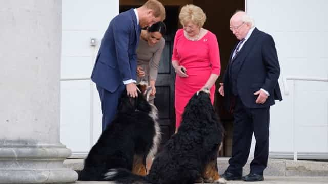 The Head Of State Of Ireland Goes Anywhere With His Love Dogs