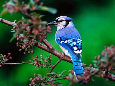 Bird Photography hd Wallpaper