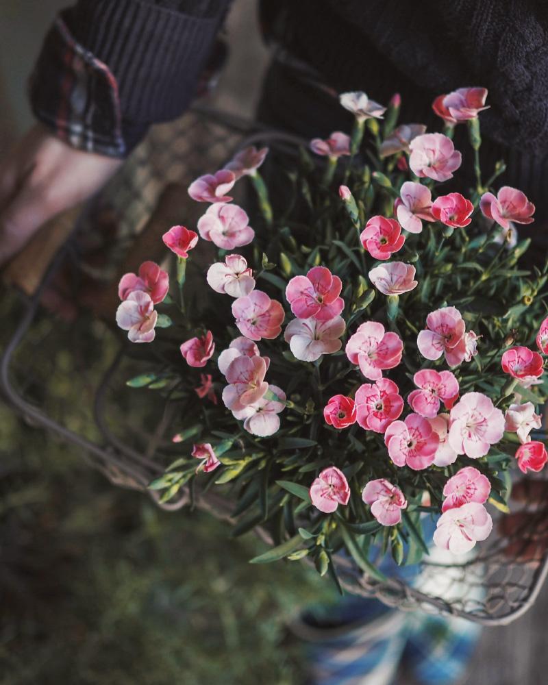 Activité slow : jardiner au printemps