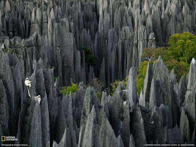 Tsingy de Bemaraha, Πέτρινο δάσος στην Μαγαδασκάρη