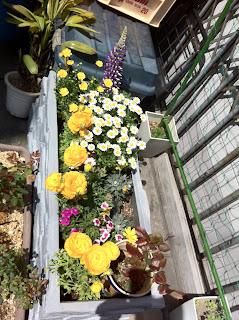 Flowery Tokyo Japan