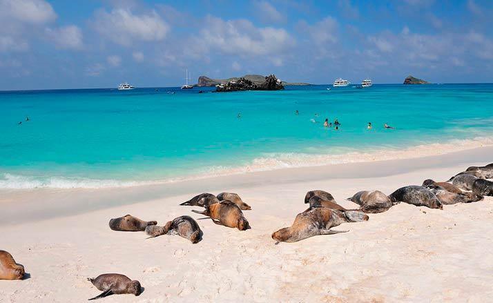 ¿Cómo planificar mi primer viaje a las Islas Galápagos?