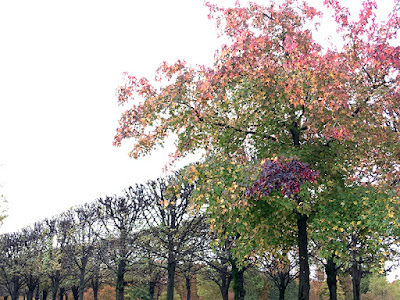 multi-color tree leaves  in pink, green, yellow & purple in Paris