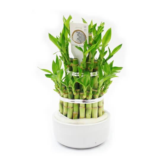 beyaz-saksida-bambu-1.jpg
