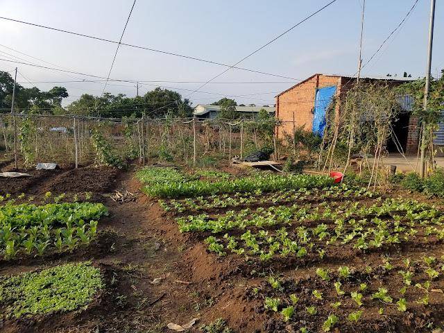 Khu vườn đơn sơ của hai bác nông dân
