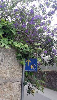 sinalização do Caminho de Santiago de Compostela