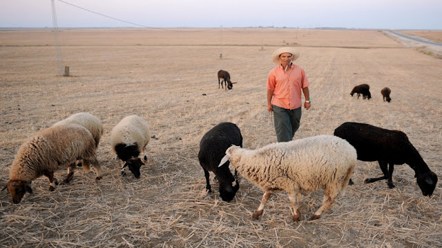 المهدية : توزيع 23 مشروعا في تربية الماشية