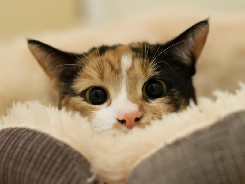 kot atakuje, kot gryzie ręce, kot atakuje nogi, kot gryzie nogi, kot czai się, kot poluje na mnie, kot poluje na człowieka, kot rzuca się, kot agresywny, kocia agresja, koci behawiorysta, kot warszawski