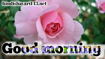 HD Good morning images with flowers