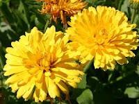 Perempuan Harus Tahu, Inilah 5 Jenis Bunga Yang banyak Ditemukan Dalam Kandungan Skincare