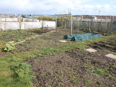 Allotment Growing - Sowing Turnips