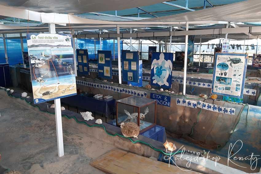 Centrum ratowania żółwi morskich na Lampedusie