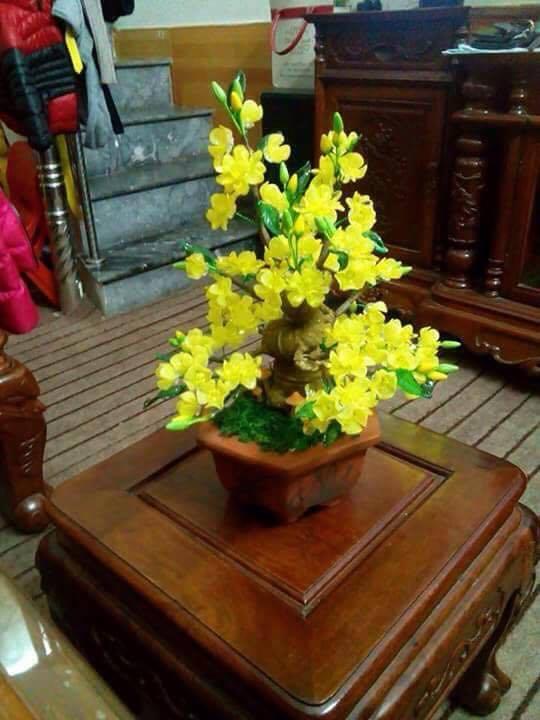 Goc bonsai mai dao o Hao Nam