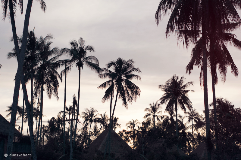 palmen sonnenuntergang strand