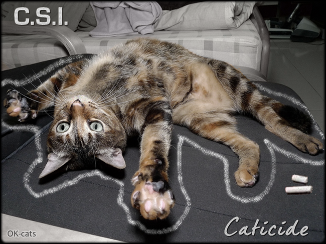 Photoshopped Cat picture •  CSI Crime Scene Investigation • Dramatic CATicide last night! Don't be sad, still have 8 lives left
