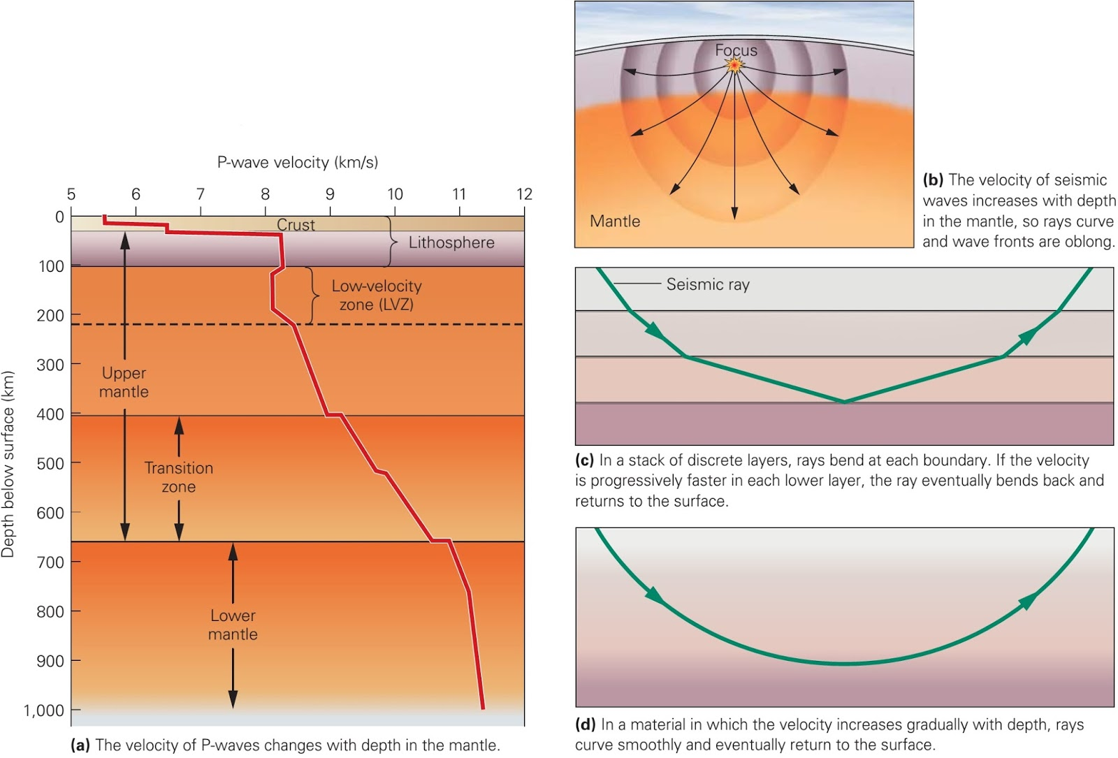 Which Seismic Waves Travel The Fastest Within Earth S Interior Earth39s Crust Is Made Up Velocity Of P In Mantle Changes Because Physical Properties Change With Depth