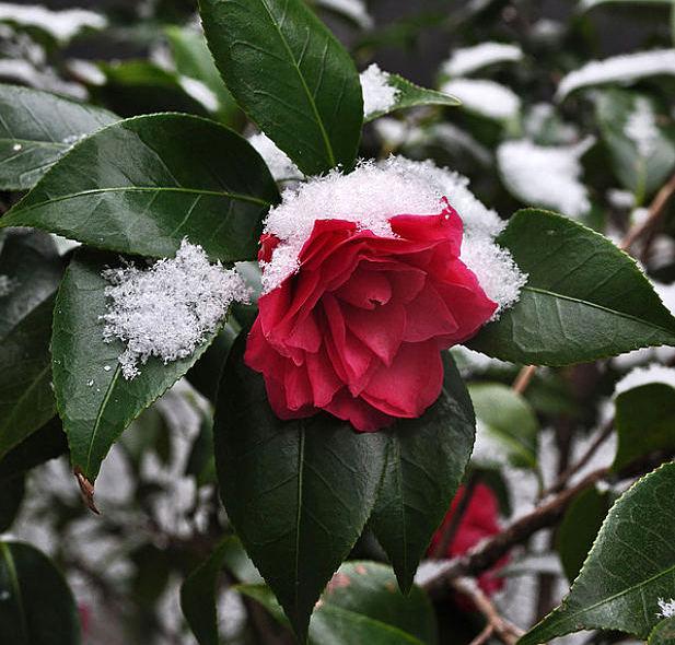 Πως θα προστατέψετε τα φυτά σας από  ΚΡΥΟ-ΠΑΓΕΤΟ