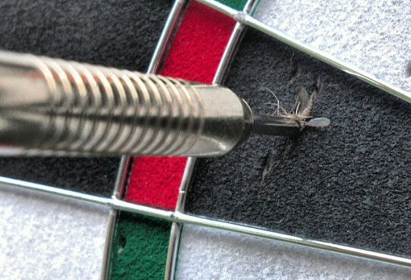 Mosquitoes stuck in the arrow of darts.