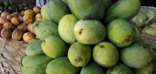 Jenis Mangga Paling Enak di Indonesia