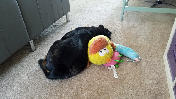 image of Zelda the Black and Tan Mutt lying on the floor next to her pile of plushy toys