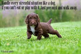 Handle every stressful situation like a dog
