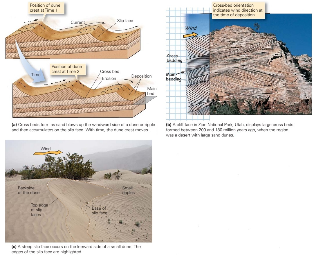 Diagram Of Dune Formation Gfci Wiring Feed Through Method Sedimentary Structures Learning Geology
