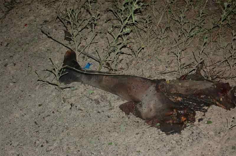 Graphic: Army troops kill female suicide bomber in Borno