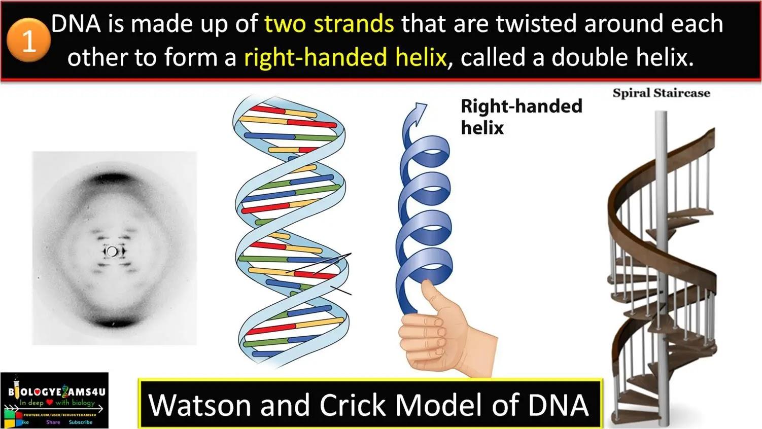 10 Salient Features of DNA double helix model