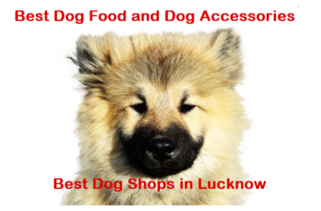 dog shop in lucknow, lucknow dog shops, dog shop near me lucknow, best dog shop in lucknow, dog price in lucknow