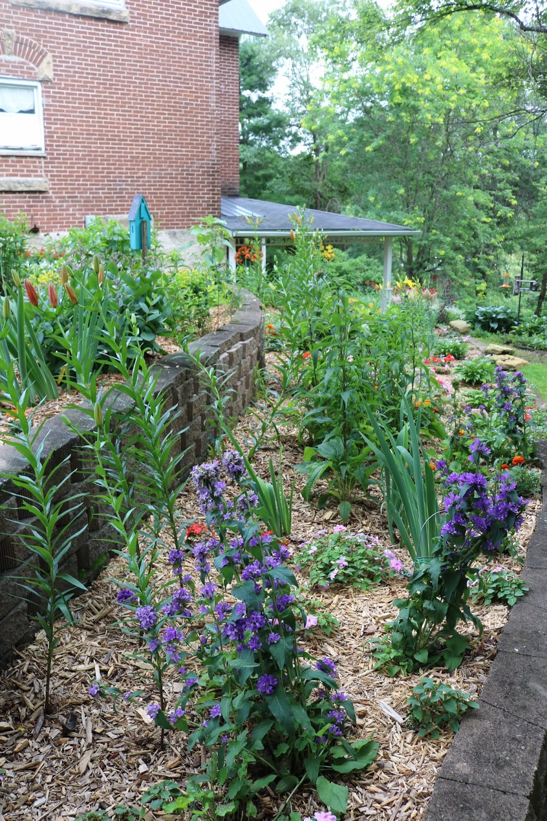 Amy S Creative Pursuits My Early July Garden 2019