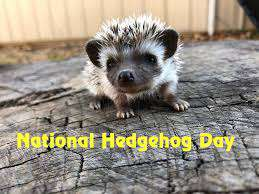 National Hedgehog Day Wishes Unique Image