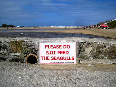 don't feed seagulls