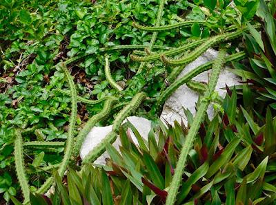 beauty, cacti, flora, good energy, magic of paya, nature, #payabay, #payabayresort, paya bay resort,