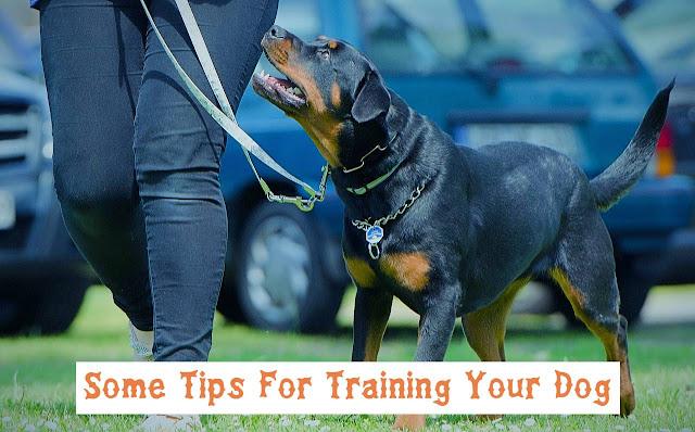 training a dog