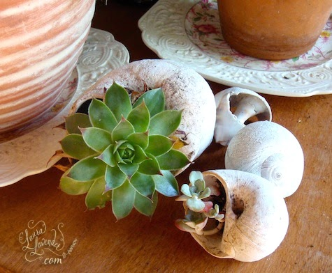 Succulent Shell Planter Ideas Amp Tips Coastal Decor Ideas