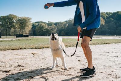 teach puppy to walk on leash