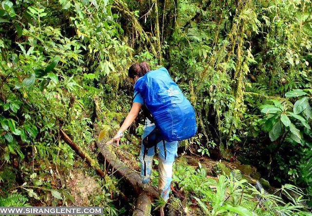 trails of Mt. Halcon